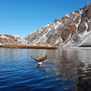 trollfjord eagle