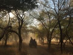 7. Open jeep safari - Ranthambore