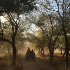 7. Open jeep safari - Ranthambore